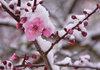По-малко български плодове и зеленчуци на пазара заради студеното време