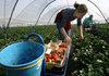 Броят на нелегалните работници в ЕС достигна 60%