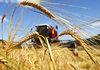 19 инвестиционни предложения в агросектора са постъпили в община Добрич