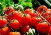 Биоземеделието ще подписва декларации за съгласие