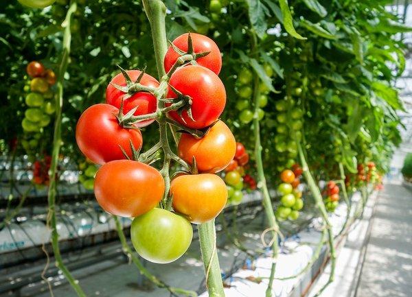 Производителите на плодове и зеленчуци получиха над 83 млн. лв. по схемите за обвързана подкрепа за Кампания 2020