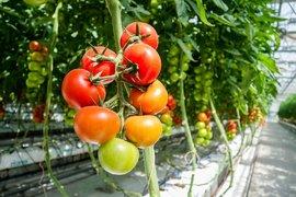 """ДФ """"Земеделие"""" приема заявления за сертифициране по стандарта GLOBALG.A.P."""