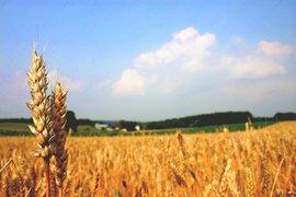 """ДФ """"Земеделие"""" преведе близо 113 млн. лева по Схемата за преразпределително плащане за Кампания 2020"""