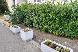 Озеленяват над 180 пространства в софийските квартали