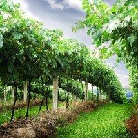 До 19 февруари се приемат документи по мярката за инвестиции във винарски изби