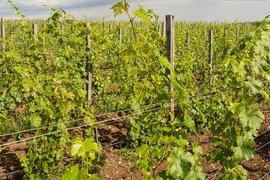 Българските вина могат да се мерят с тези на световните пазари