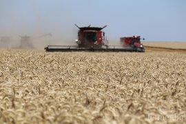 Износът на пшеница от ЕС на се понижили през изминалата година
