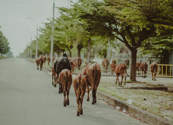Животновъдите получиха над 23 млн. лева по de minimis