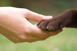Ново българско мобилно приложение помага на животни в беда