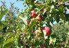 3.6 млн. лв държавна помощ за производителите на плодове и зеленчуци през 2019 г.