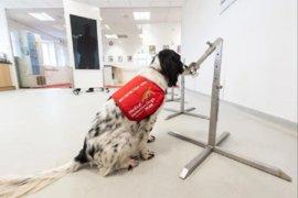 """Специално обучени """"кучета за откриване на заболявания"""" ще надушват коронавируса"""