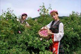 Празникът на розата и розовото масло на България