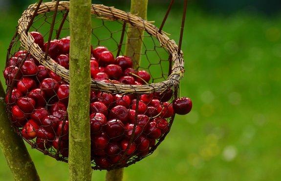 От 21 април производителите на плодове и зеленчуци кандидатстват за краткосрочни кредити