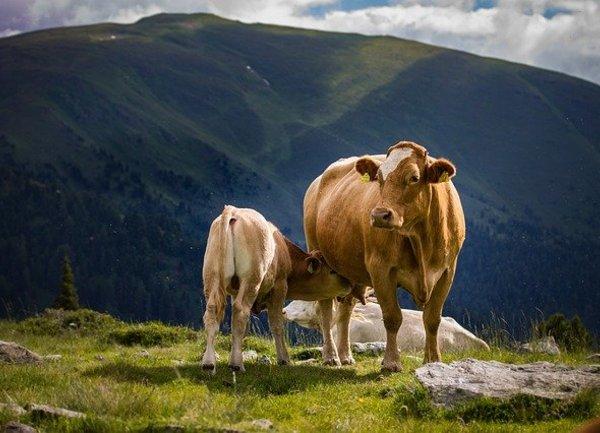 От 8 април животновъдите могат да кандидатстват по Мярка 14 от ПРСР 2014-2020
