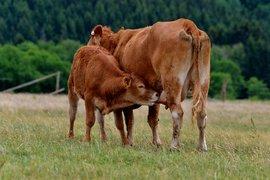Първите изкупвачи на мляко ще регистрират договорите си онлайн