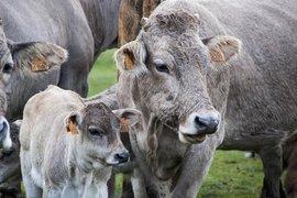 Започна прием по държавната помощ за родословна книга и селекция на животните