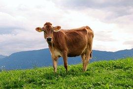 """Клиент на """"Агритоп"""" спечели приза за """"най-добър фермер-животновъд за 2015"""""""