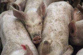 Над 3.2 млн. лева се отпускат за имунопрофилактика на животните