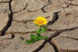 13,4 млн. лева компенсации получават стопаните заради сушата