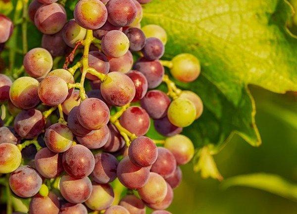 Шест проекта на мерки в лозаро-винарския сектор за новата ОСП бяха представени за широка дискусия