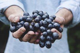 ДФЗ започна изплащането на помощта de minimis за плодове, зеленчуци, маслодайна роза и винени лозя