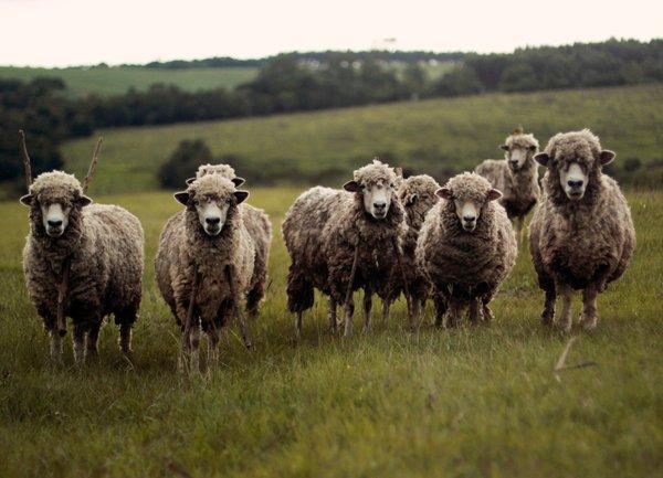 Животновъдите кандидатстват от 28 юни по схемата de minimis