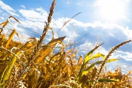 Допълнителна финансова подкрепа ще получат държавите-членки на ЕС заради сушата