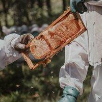 500 пчелари и производители са се регистрирали до момента в електронната система за контрол на пръсканията на земеделските площи