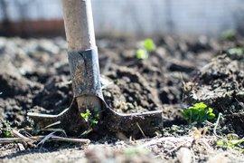 Министър Танева: Предвиждаме земеделските стопани с пропаднали площи под 80 % заради сушата да бъдат компенсирани по de minimis