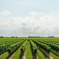 """Държавен фонд """"Земеделие"""" изплати над 70 милиона лева по COVID 1"""