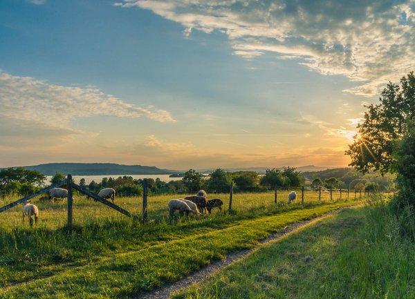 ДФЗ продължава с по-ранното изплащане на средства към земеделските стопани