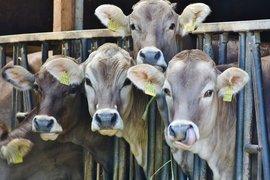 Започва втори прием по de minimis за животновъди