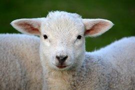 Животновъдите получиха 22 млн. лева по de minimis