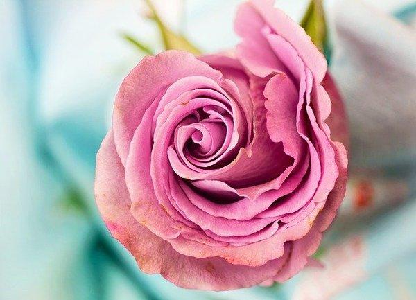 Министър Танева: След 16 септември ще започне поетапното изплащане по de minimis за плодове и зеленчуци, винени лозя и маслодайна роза