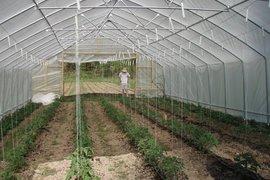 Още 3 млн. лева получиха производителите на плодове и зеленчуци